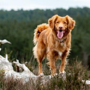 rauwvoer voor de hond